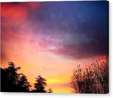 Sunset Canvas Print by Niki Mastromonaco