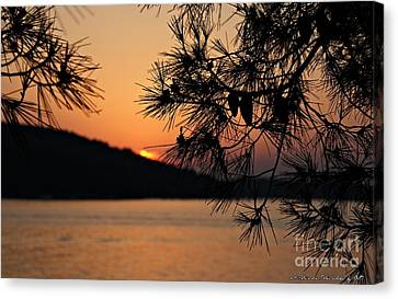 Sunset Canvas Print by Olivia Narius