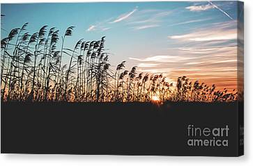 Sunset On Cameron Prairie National Wildlife Refuge Canvas Print by Scott Pellegrin