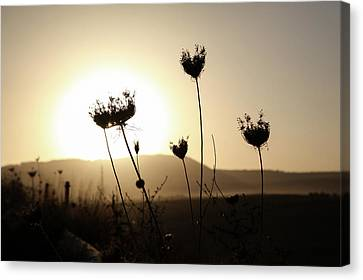 Canvas Print featuring the photograph Sunset On Galilee Road by Yoel Koskas