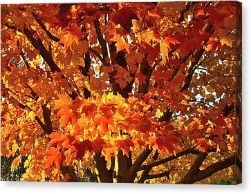 Canvas Print featuring the photograph Sunset On Sugar Maple by Ray Mathis