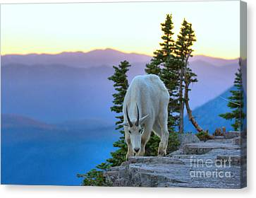 Sunset On The Cliff Canvas Print
