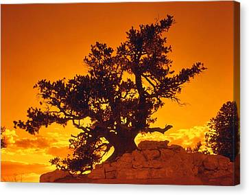 Sunset On The North Rim Canvas Print