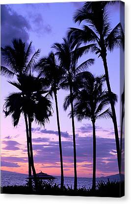 Sunset On The Palms Canvas Print by Debbie Karnes