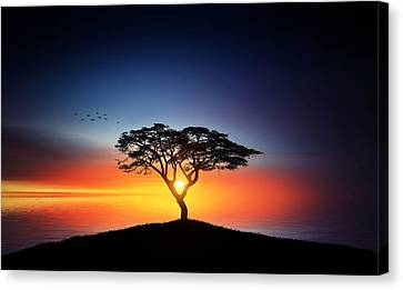 Sunset On The Tree Canvas Print by Bess Hamiti