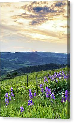 Sunset Over Chianti With Iris Canvas Print