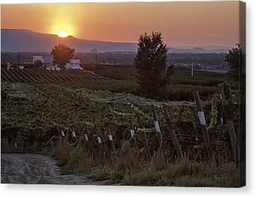 Sunset Over Colorado Vineyard Canvas Print by Teri Virbickis