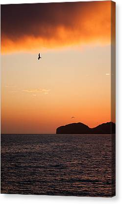 Sunset Over Sea Of Cortez Canvas Print by Dina Calvarese