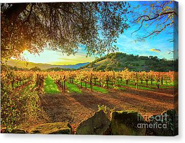 Cellar Canvas Print - Sunset Over Napa  by Jon Neidert
