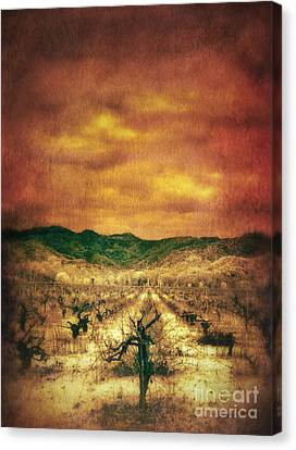 Sunset Over Vineyard Canvas Print by Jill Battaglia