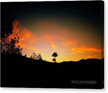 Sunset - Palm Mountain Canvas Print by Guy Hoffman