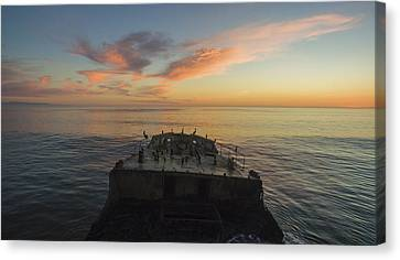 Sunset Perch Canvas Print by David Levy