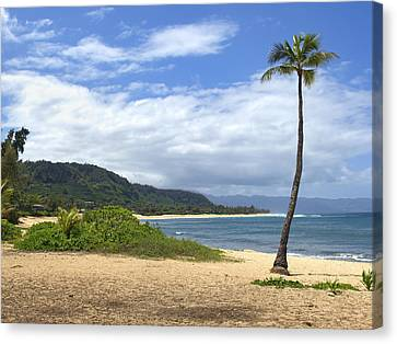 Sunset Point Palm Tree Canvas Print by Paul Topp