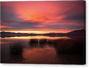 Sunset Reeds On Utah Lake Canvas Print