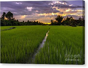 Sunset Rice Fields In Cambodia Canvas Print by Mike Reid