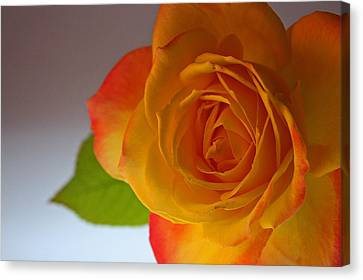 Sunset Rose Canvas Print by Bobby Villapando