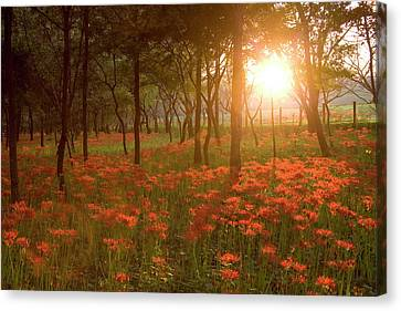 Sunset Canvas Print by Sachiko's photography