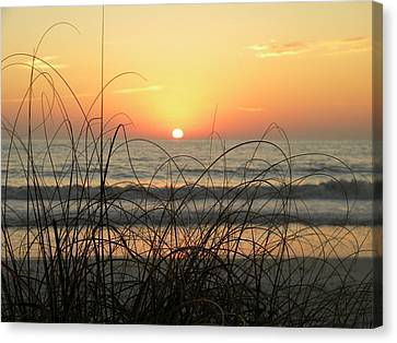 Sunset Sea Grass Canvas Print by Sean Allen