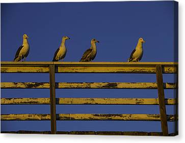 Sea Watch Canvas Print - Sunset Seagulls by Garry Gay