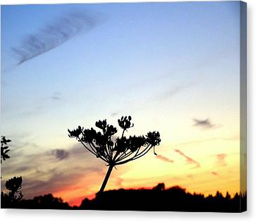 Sunset Seedhead Silhouette  Canvas Print