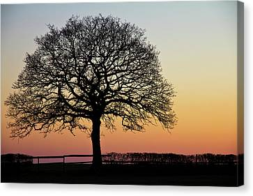 Canvas Print featuring the photograph Sunset Silhouette by Clare Bambers