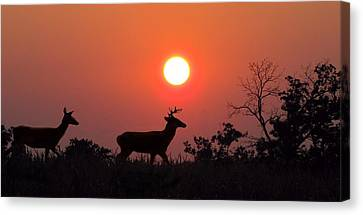 Sunset Silhouette Canvas Print by David Dehner