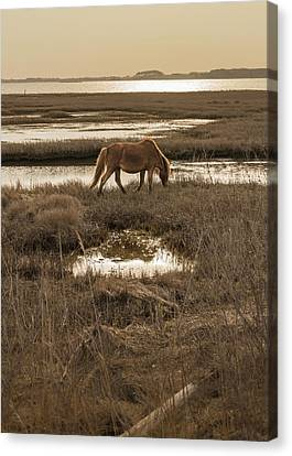 Wild Horse Canvas Print - Sunset Stroll by Kristopher Schoenleber