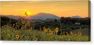 Sunset Sunflowers Canvas Print by Tommyscapes
