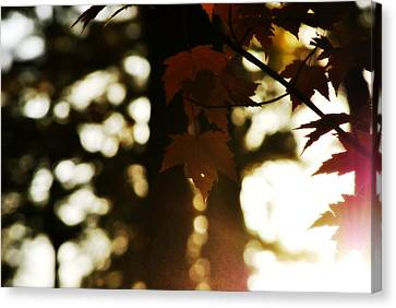Cabin Wall Canvas Print - Sunset Through Autumn Foliage by Chastity Hoff