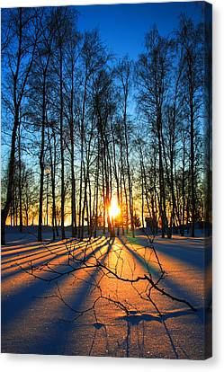 Finland Canvas Print - Sunset Through Leafless Trees Finland by Sandra Rugina