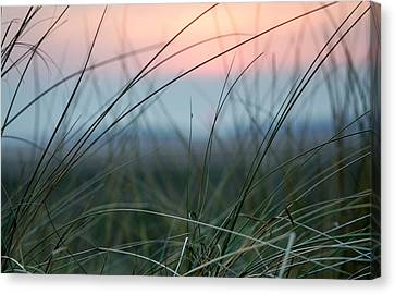 Sunset  Through The Marsh Grass Canvas Print