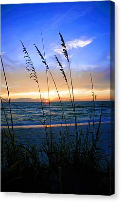 Sunset Thru The Sea Oats At Delnor Wiggins Canvas Print