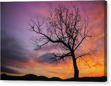 Canvas Print featuring the photograph Sunset Tree by Darren White