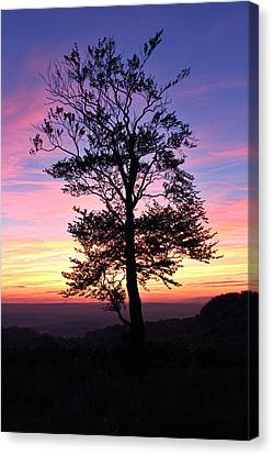 Canvas Print featuring the photograph Sunset Tree by RKAB Works