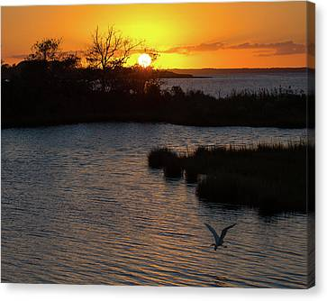 Sunset With An Egret Canvas Print