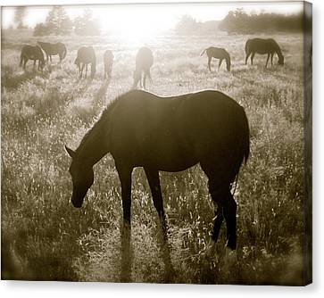 Sunset With Band Of Horses Canvas Print by Kate Purdy