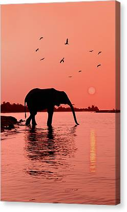 Elephants Canvas Print - Sunset With Elephant by Christian Heeb