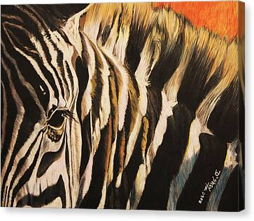 Sunset Zebra Canvas Print by Don MacCarthy