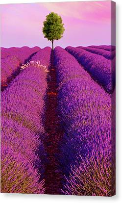 Sunsets Are Purple Canvas Print