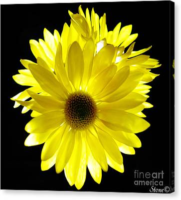 Sunshine  Canvas Print by September  Stone