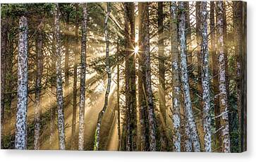Canvas Print featuring the photograph Sunshine Forest by Pierre Leclerc Photography
