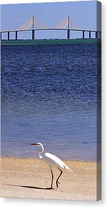 Sunshine Skyway Bridge With White Egret Canvas Print by Rose  Hill