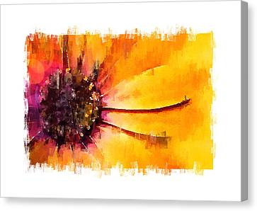 Sunshine Canvas Print by Steve K