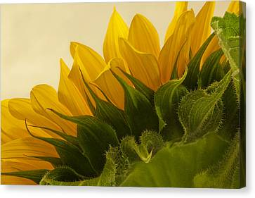 Sunshine Under The Petals Canvas Print
