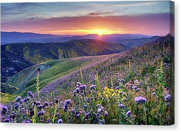Canvas Print featuring the photograph Super Bloom In California Desert by Peter Thoeny