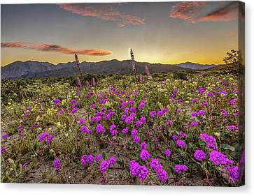 Canvas Print featuring the photograph Super Bloom Sunset by Peter Tellone