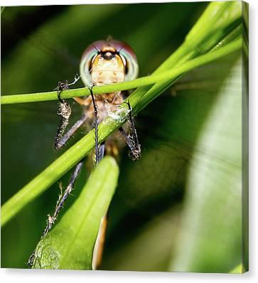 Super Efficent Super Amazing Dragonfly Canvas Print by Miroslava Jurcik