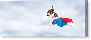 Super Hero Dog Flying Through Sky Canvas Print by Susan Schmitz