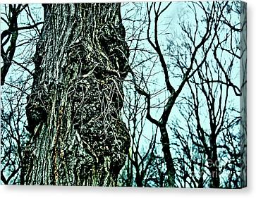 Canvas Print featuring the photograph Super Tree by Sandy Moulder