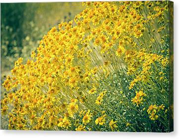 Superbloom Golden Yellow Canvas Print